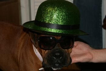 St. Patty's Dog.